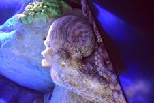 /3 JAN 2015/ S.E.A. Aquarium